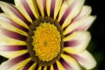 פרחי באך ודיכאון